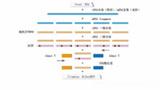 链特异性转录组测序