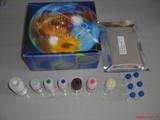 小鼠M-CSF检测Elisa试剂盒