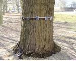 德国Angus Electronic品牌  PiCUS弹性波树木断层画像诊断装置