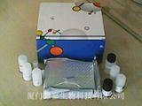 人C多肽(CP)ELISA试剂盒
