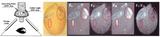FluorCam台式植物多光譜熒光成像系統 ——植物表型與生理生態實驗研究應用最廣的儀器技術