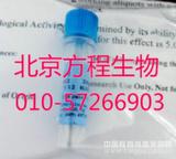 重组人骨桥蛋白 Recombinant Human Osteopontin