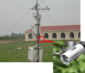 CR红外冠层温度监测系统