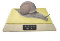 軟體動物—蝸牛