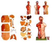 醫學模型-人體解剖模型-人體骨骼模型-威軟醫學