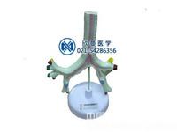 气管、支气管及肺段支气管模型,人体解剖模型