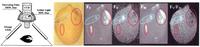 FluorCam台式植物多光谱荧光成像系统 ——植物表型与生理生态实验研究应用最广的仪器技术