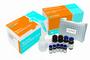 伏马毒素(烟曲霉毒素)检测试剂盒