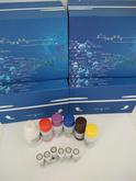 上海酶科品牌  试剂盒  人(Human)白介素1(IL-1)ELISA Kit  [请填写核心参数/卖点]