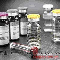 人甲胎蛋白(AFP)ELISA试剂盒