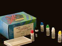 小鼠巨噬细胞集落刺激因子试剂盒