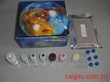 猪食欲素/阿立新B(OX-B)ELISA试剂盒