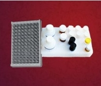 人嗜环蛋白/亲环素A(CyPA)ELISA试剂盒