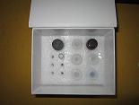 活化凝血因子ⅫELISA试剂盒厂家代测,进口人(FⅫa)ELISA Kit说明书
