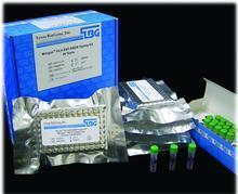 小鼠HSP gp96试剂盒(热休克蛋白糖蛋白96)ELISA试剂盒提供专业售后