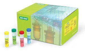 小鼠心肌转录因子(GATA4)ELISA 试剂盒