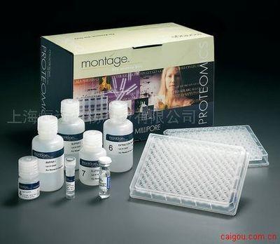 大鼠血管生长素ELISA试剂盒