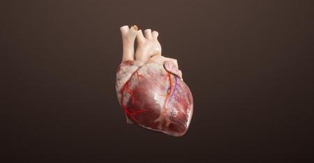心血管系统   介入形式治疗  医学系统  VR虚拟仿真教学