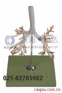 支气管树模型