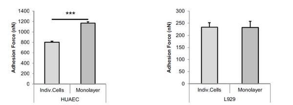 单个细胞级别的粘附力测定