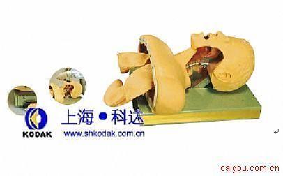 高级经典气管插管训练模型(新品上市)