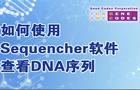 如何使用Sequencher软件查看DNA序列