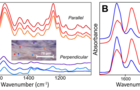 从完整肌腱到单纤丝:偏振红外光谱强势助力胶原蛋白的分子取向研究