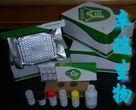 小鼠表面膜免疫球蛋白A(mIgA)Elisa试剂盒