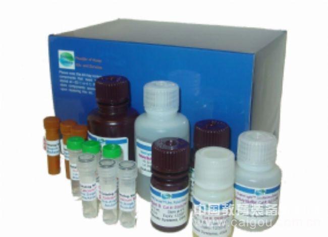 人白细胞活化黏附因子(ALCAM)ELISA试剂盒