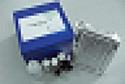 代测大鼠乙酰胆碱(Ach)ELISA试剂盒价格