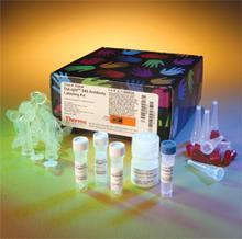 人IGFBP2试剂盒,IGFBP2 ELISA KIT,人胰岛素样生长因子结合蛋白2试剂盒