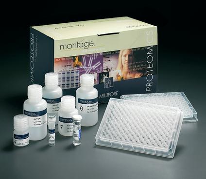 人高迁移率族蛋白1(HMGB1)ELISA试剂盒