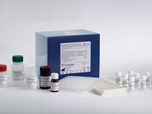 人CXC趋化因子受体1(CXCR1)ELISA试剂盒