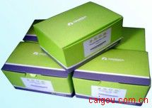 Plasmid Maxi Kit