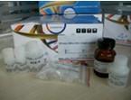TRzol LS(液体样本RNA提取试剂)