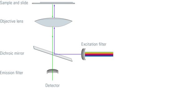 徕卡显微镜:荧光显微镜介绍